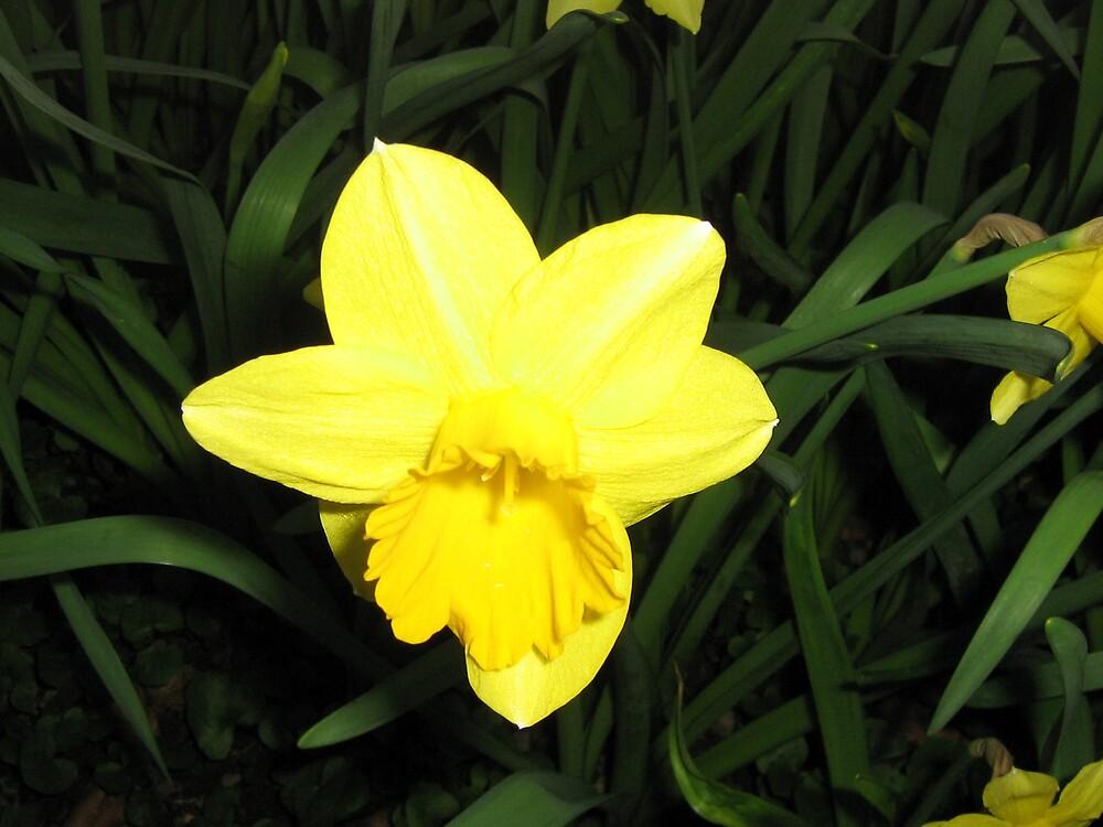 Blooming Flower by LeslieSweets