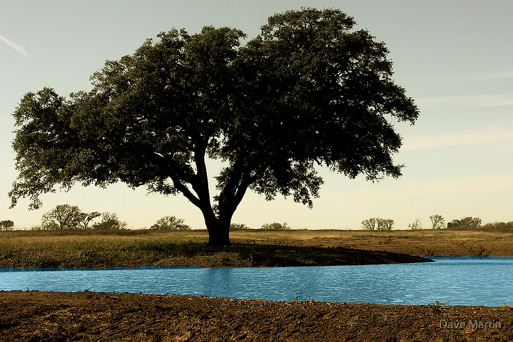 Tree by Pond by Dave Martin