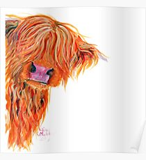 HIGHLAND COW 'PEEKABOO' BY SHIRLEY MACARTHUR Poster