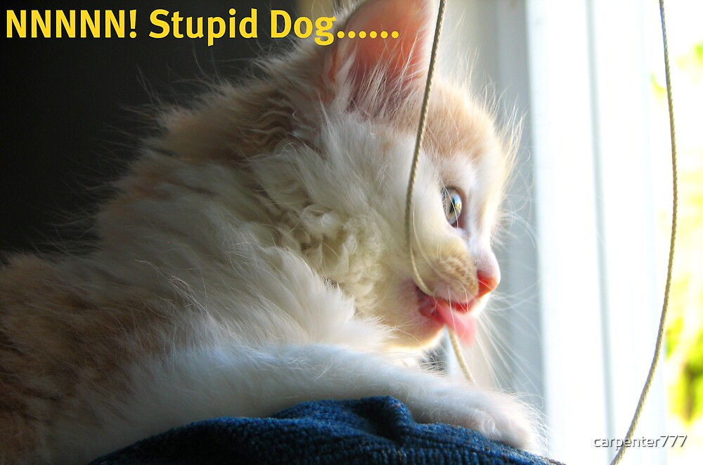 Stupid dog by carpenter777