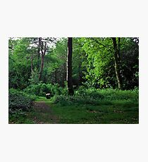 Sleepy Forest Photographic Print