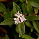 Wildflower by MMerritt