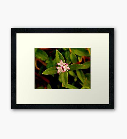 Wilderflower Framed Print