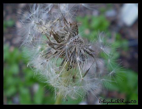 Blown Away by elizabethrose05