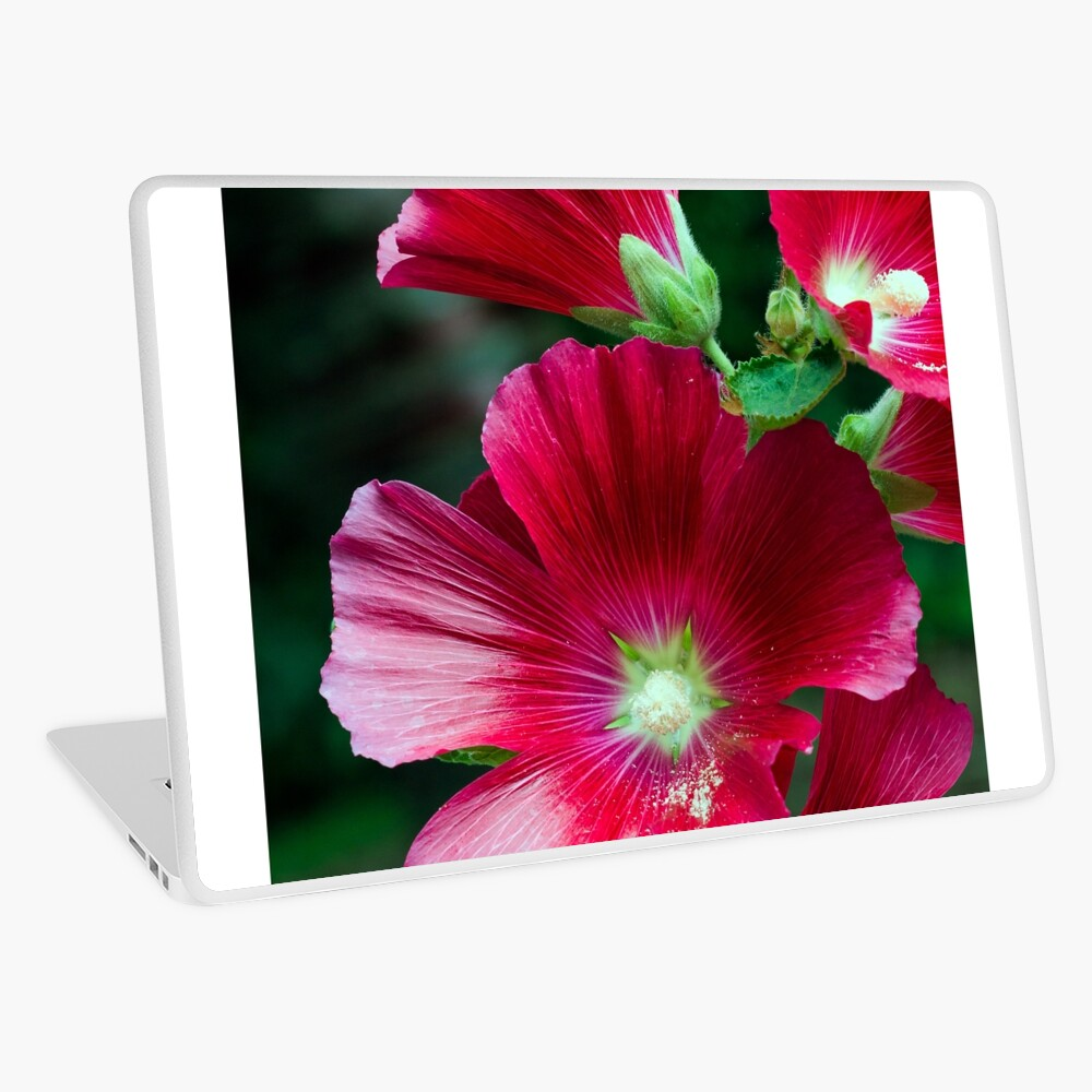 Deep red Hollyhock flowers Laptop Skin