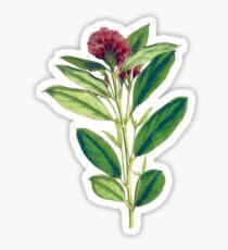 Dwarf red combretum art good flower Sticker