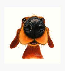 NOSIGER HUND 'NOSY NANDO' VON SHIRLEY MACARTHUR Kunstdruck