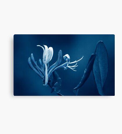 Honeysuckle Bloom Canvas Print