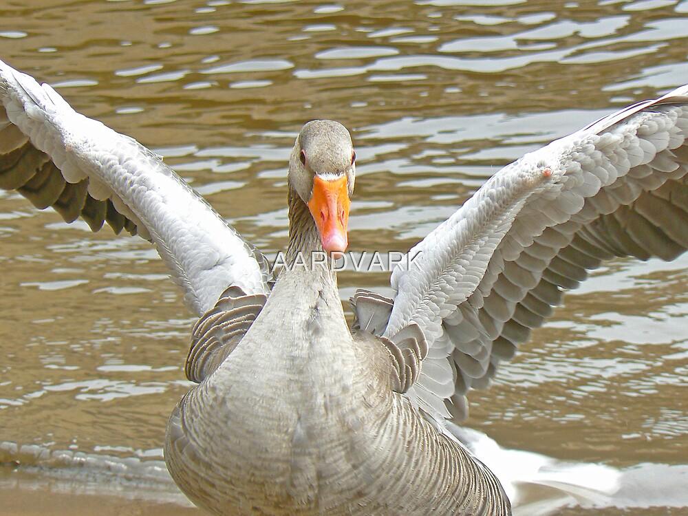 A Graylag Goose by AARDVARK