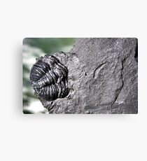 The Old Fossil Canvas Print