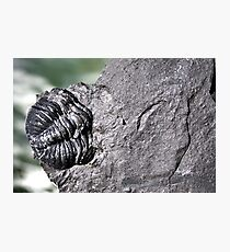 The Old Fossil Photographic Print