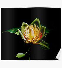 Maple Flower Poster