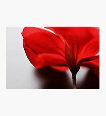 Scarlet Petal Photographic Print