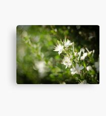 Bright Day, Tiny Flower Canvas Print
