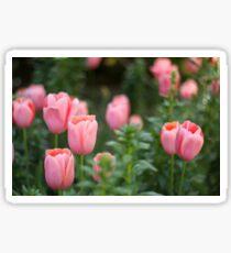 Tulips - Pink Sticker