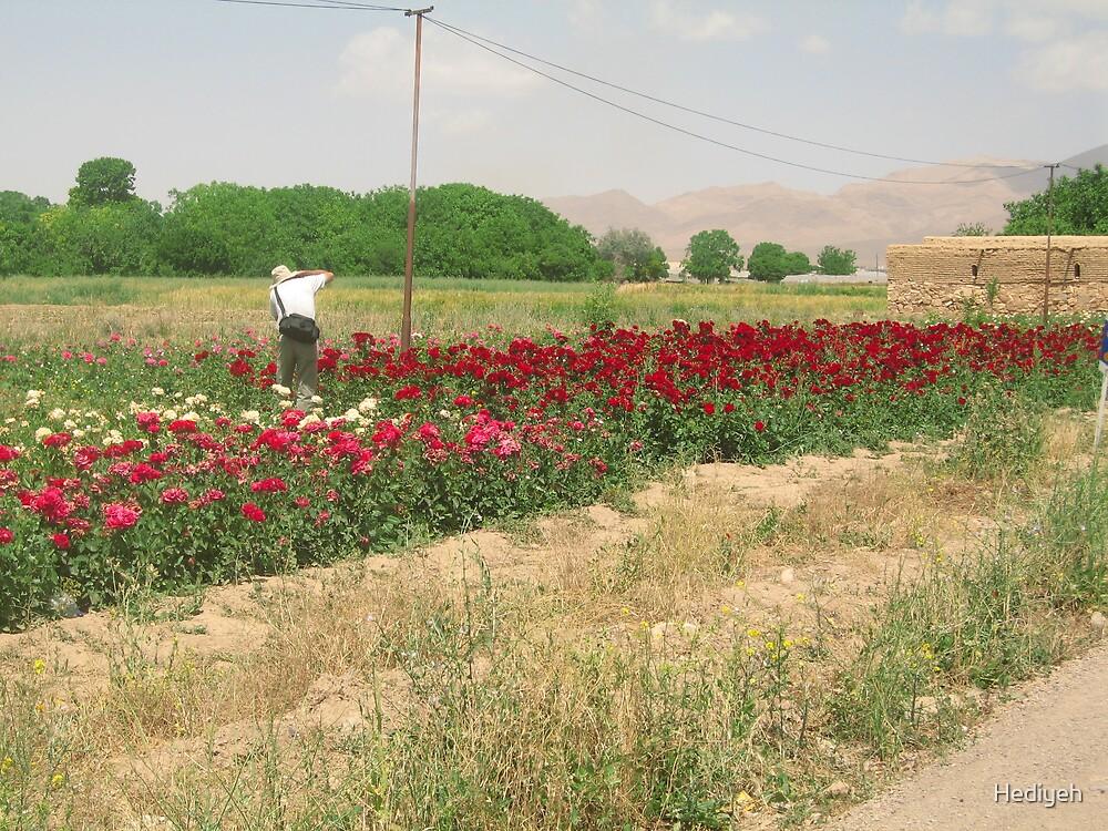 Golpayegan-Iran by Hediyeh