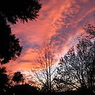 Blushing sky by Patricia01