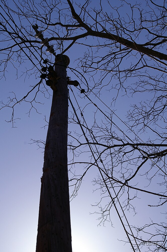 Power Pole with Tree by rdshaw