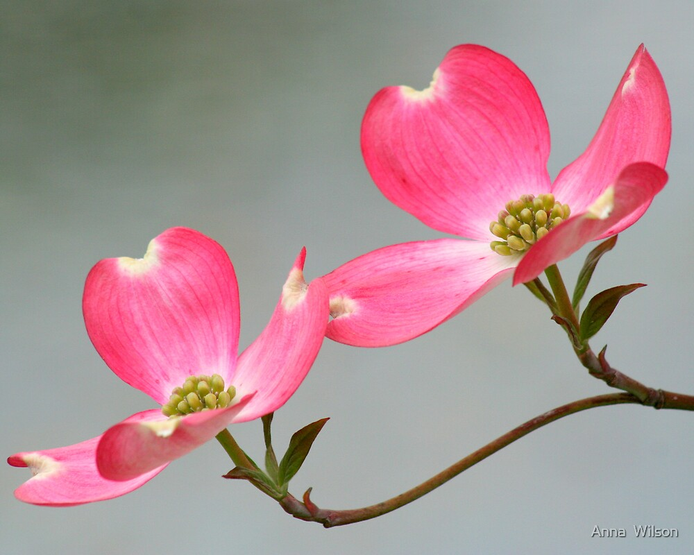 In The Pink by Anna  Wilson