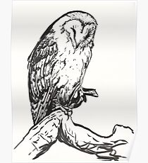 Sleeping Barn Owl Brush Pen Drawing Poster