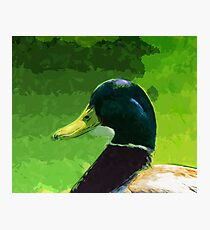 Male Mallard Duck Abstract Impressionism Photographic Print