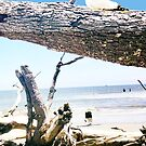 Daydreams and Driftwood by Seth  Weaver
