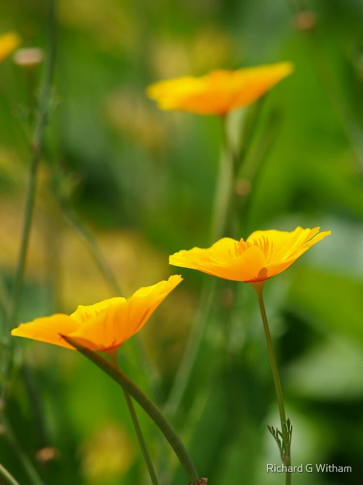 Shades of Orange by davfoto