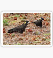 Yellow-tailed Black Cockatoo  (772) Sticker