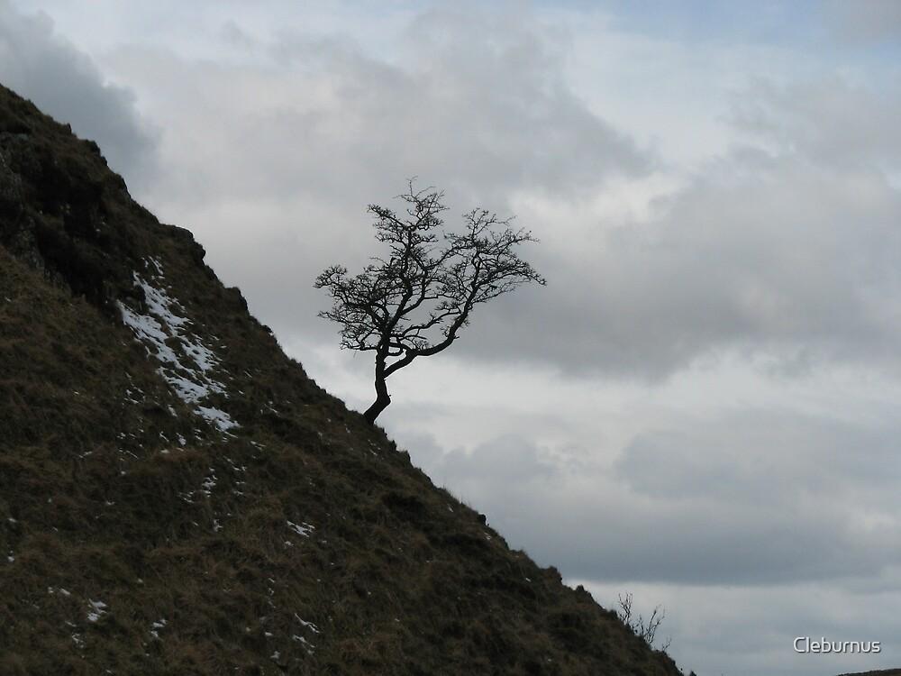 Hadrian's Tree by Cleburnus