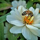 Busy Bee by lindsycarranza