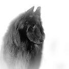 Black on White by Josie Jackson
