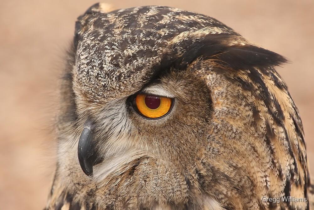 Eagle Owl by Gregg Williams