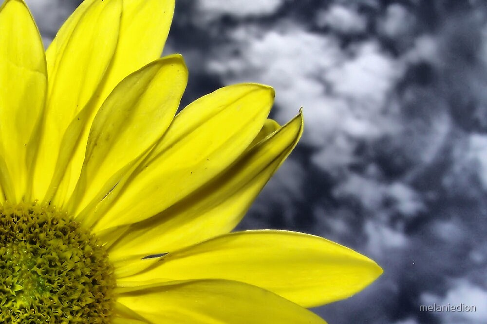 ~Yellow~ by melaniedion