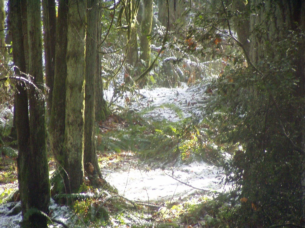 Forest Sun Rays in the Snow #48 by Dawna Morton