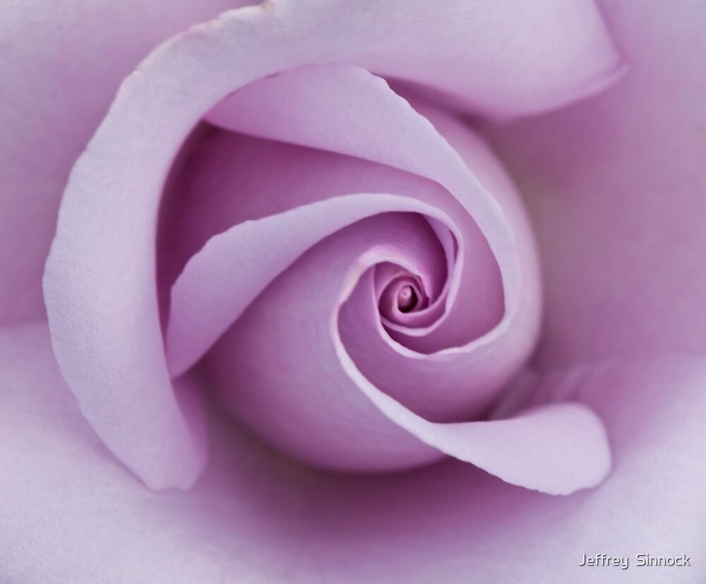 Sterling Silver rose closeup by Jeffrey  Sinnock