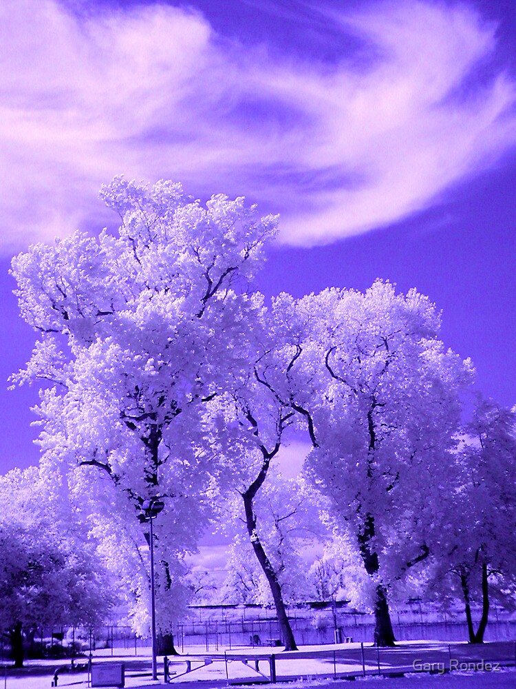 My First IR by Gary Rondez