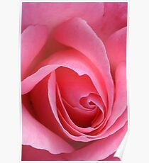 TIS the last Rose of Summer Poster