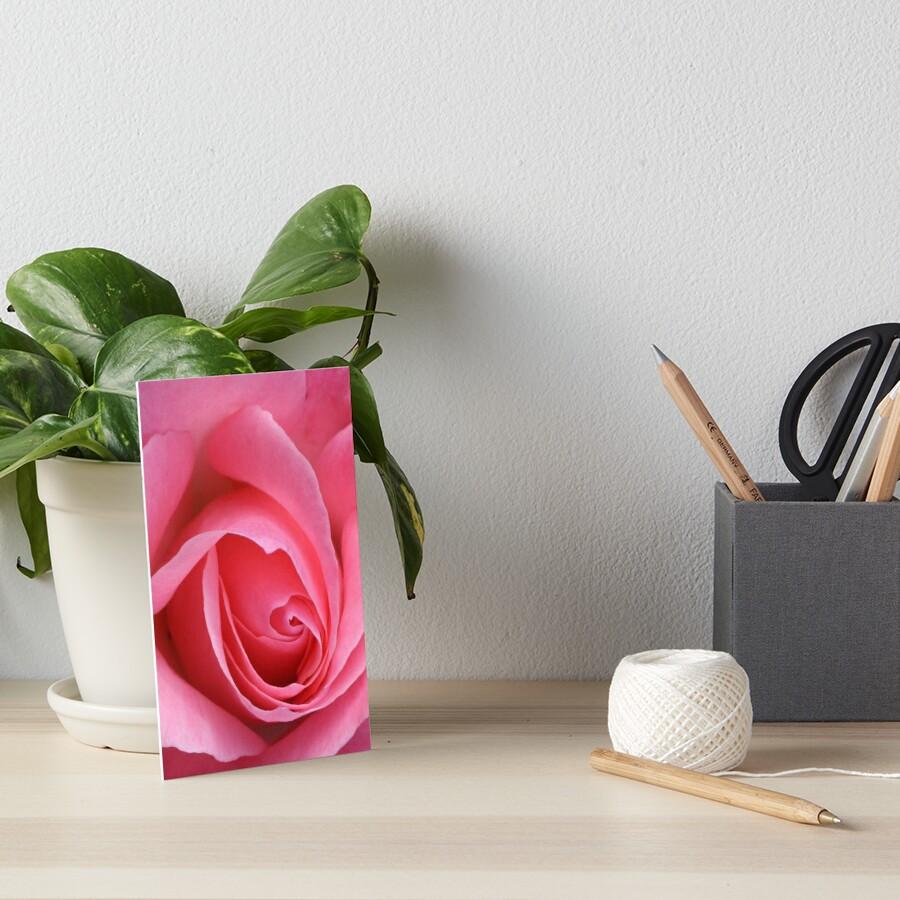 TIS the last Rose of Summer by patjila