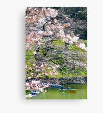 Cherry Blossom Lovers Canvas Print