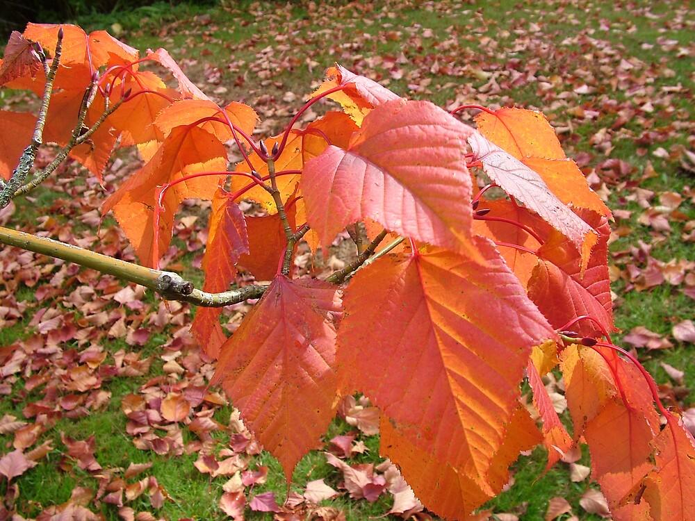 Leaves  by Meryl  Moscrop