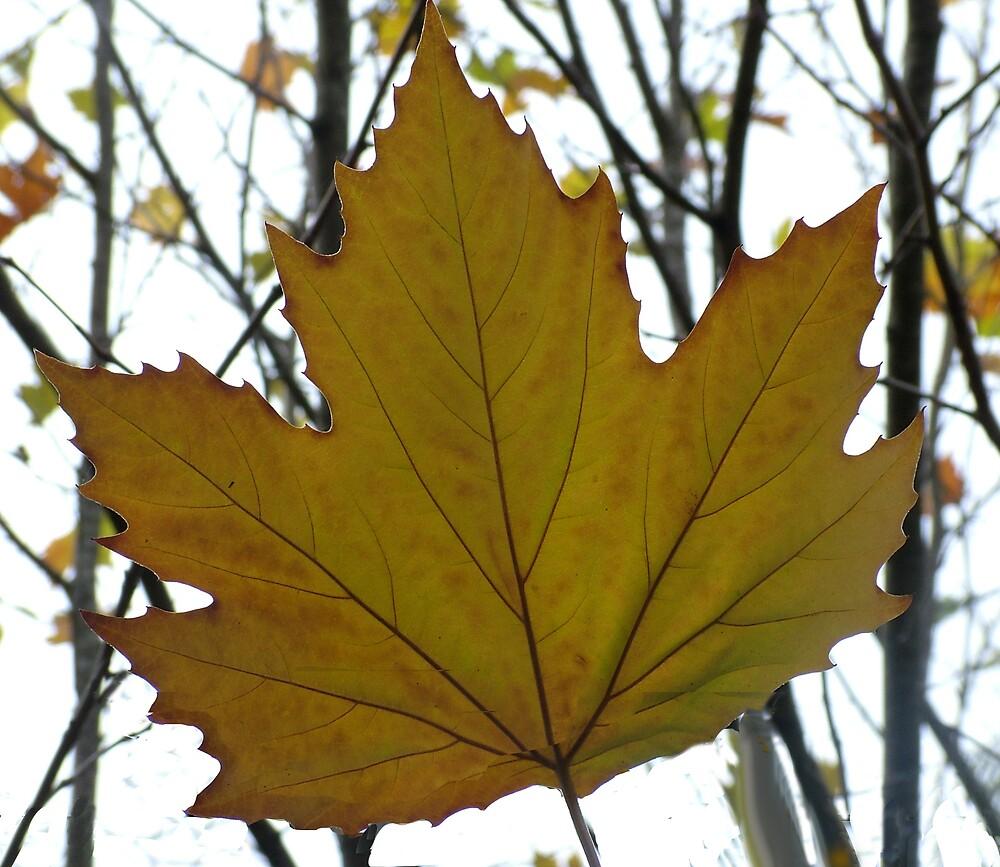 Leaf 3 by Meryl  Moscrop