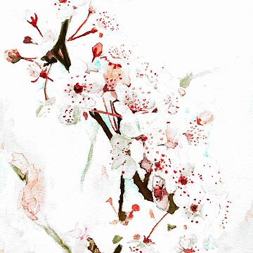 Cherry Blossom by MattSauder