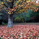 Lovely Leaves by Clare McClelland