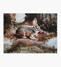 Hare - Original Oil Painting Photographic Print