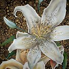 White Tiger Lily by Cherie Roe Dirksen