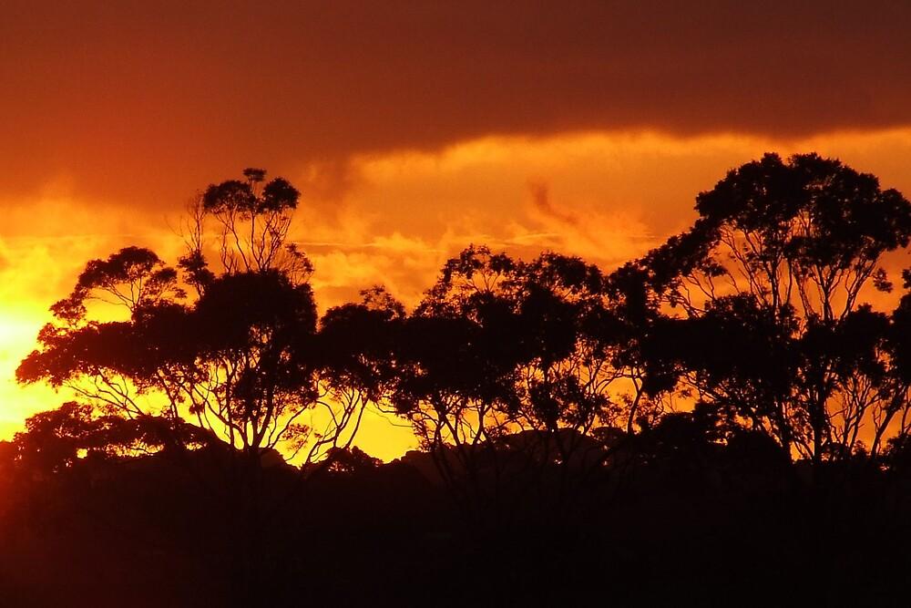 sunset horizon by SDJ1