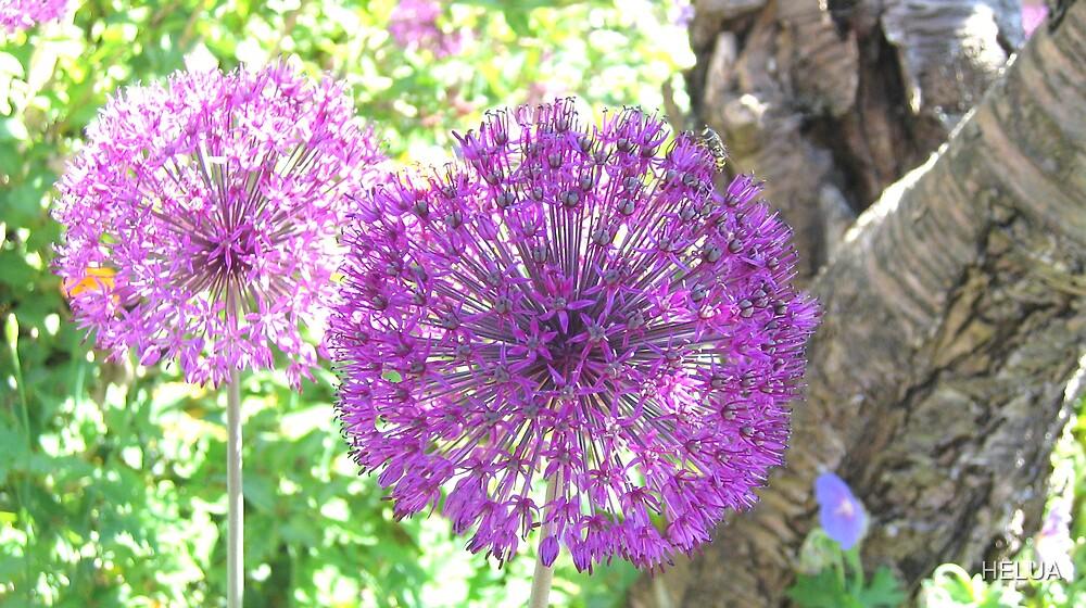 Purple Summer by HELUA