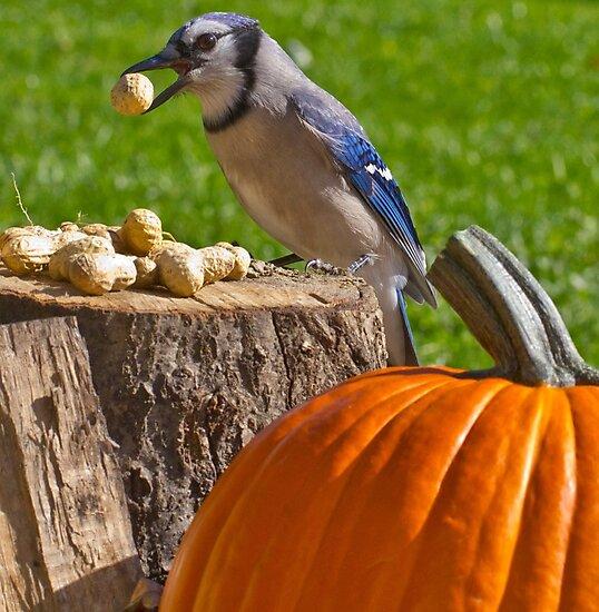 Blu Goes Nuts by Shelley Neff