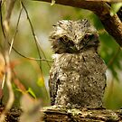 Tawny Frogmouth Juvenile by theleastone