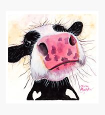 NOSEY COW 'BETTY BLUEBERRY' BY SHIRLEY MACARTHUR Photographic Print